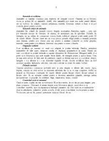 Comunicarea Non-Verbala - Pagina 2