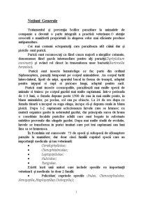 Tratamentul in Infestatiile cu Purici si Capuse la Carnivore - Pagina 1