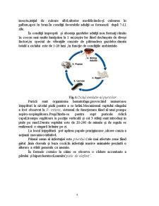 Tratamentul in Infestatiile cu Purici si Capuse la Carnivore - Pagina 4