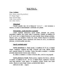 Genul Salvia - Pagina 3