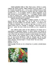 Genul Salvia - Pagina 5