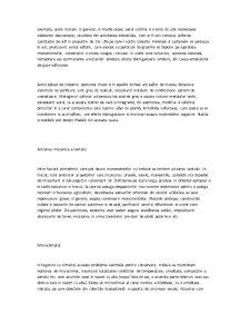 Conservarea Bunurilor Culturale - Pagina 4