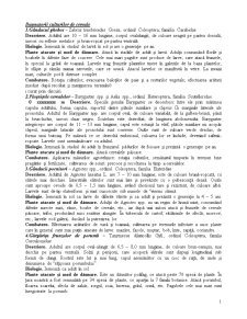 Sistematica Daunatorilor - Pagina 1