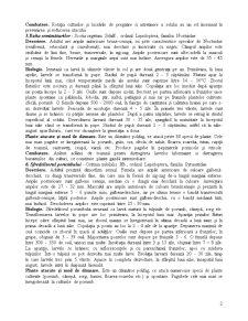Sistematica Daunatorilor - Pagina 2