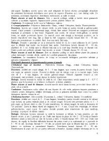 Sistematica Daunatorilor - Pagina 4