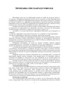 Înființarea unei Plantații Pomicole - Pagina 1