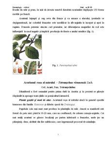 Modul de Atac si Plantele Atacate de Speciile Prezente in Plantatiile Pomicole - Pagina 3
