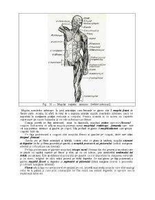 Sistemul Muscular - Pagina 3