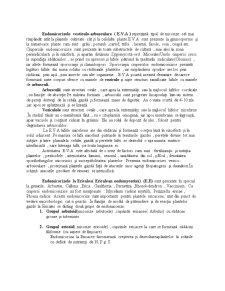 Micorize - Pagina 4