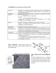 Organite Celulare - Pagina 4