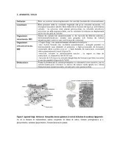 Organite Celulare - Pagina 5