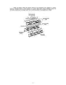 Enzime Pectinolitice de Origine Microbiană - Pagina 4