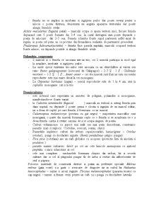 Ornitologie - Sisteme de Mariaj in Lumea Pasarilor - Pagina 3