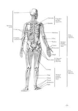 Curs - Bioinginerie Medicala