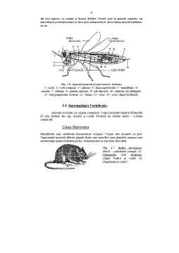 Referat - Caractere Generale ale Daunatorilor Plantelor Cultivate