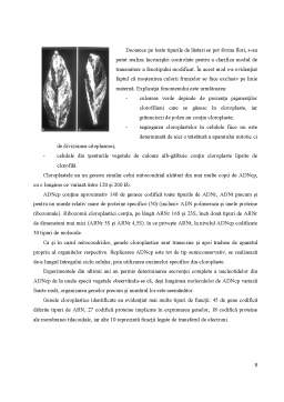 Curs - Determinismul Genetic al Sexelor