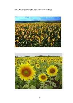 Proiect - Importanta si Raspandirea Florii–Soarelui in Lume si in Romania