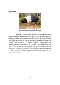 Proiect - Rasele de Porcine