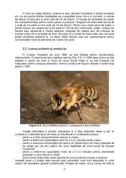 Proiect - Biomonitorizarea Mediului cu Ajutorul Albinelor