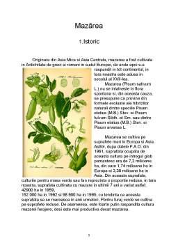 Referat - Materii Prime Vegetale - Mazarea - Pisum Sativum