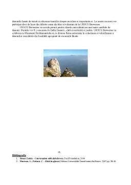 Proiect - Responsabilitatea Sociala a Companiei Ursus