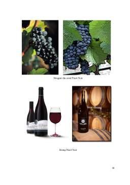 Proiect - Control Tehnic de Calitate al Vinului Roșu Pinot Noir