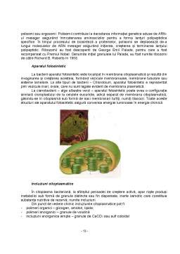 Curs - Microbiologie