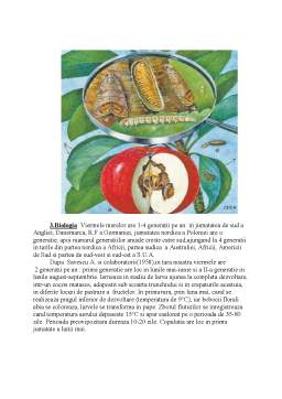 Referat - Viermele Merelor - Lespeyresia Pomonella