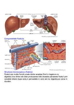 Referat - Sistemul Digestiv