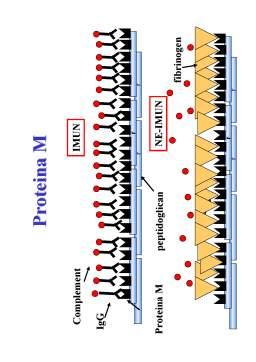 Curs - Microbiologie Generala - Curs 4