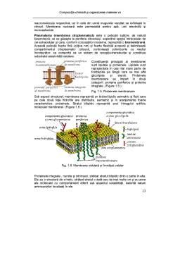 Curs - Compoziția Chimică și Organizarea Materiei Vii