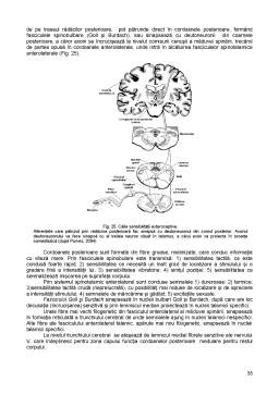 Curs - Fiziologie Animala Generala - Suport de Curs
