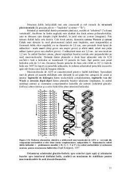 Curs - Acizii Nucleici - Detalii Structurale si Functionale