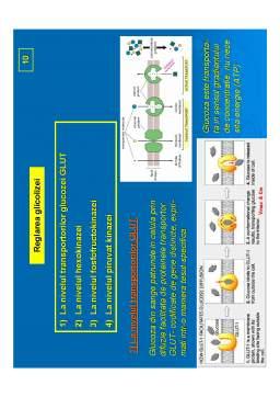 Curs - Biochimie Metabolica