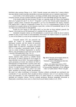 Proiect - Potentiatori de Aroma - Glutamatul Monosodic