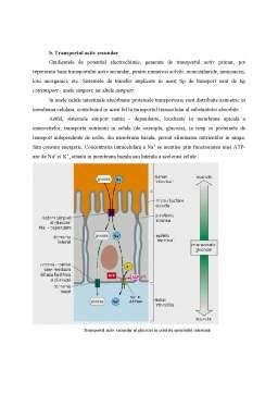 Referat - Structura Celulelor Eucariote - Fenomene de Transfer Intra si Extracelulare