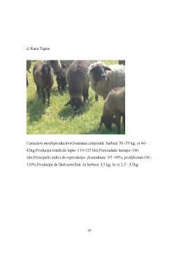 Proiect - Tehnici de Crestere a Animalelor - Ovine
