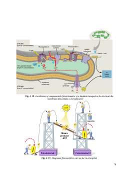 Curs - Biologie Celulara