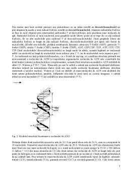 Referat - Rolul Acizilor Nucleici în Realizarea Diferitelor Caractere