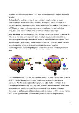 Curs - Nucleotide