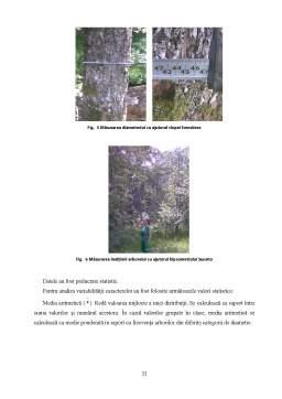 Licență - Studiul Variabilitatii Fenotipice a Speciei Acer Pseudoplatanus L in Unitatea de Productie Vii Sucu Olteana, Ocolul Silvic Otelu-Rosu