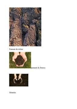 Referat - Pregatirea Substratului Nutritiv in Vederea Producerii Rasadurilor
