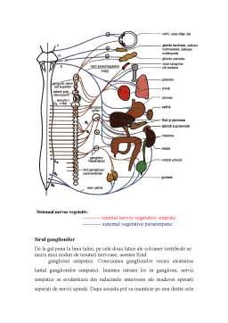 Proiect - Sistemul Nervos