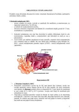 Curs - Organite Citoplasmatice