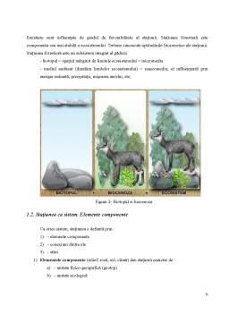 Proiect - Componentele Statiunii Forestiere