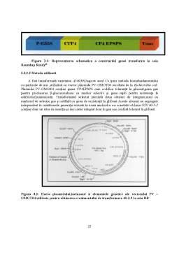 Licență - Influența Matricei și a Calității ADN asupra Detecției Organismelor Modificate Genetic în Diferite Produse Agricole și Alimentare