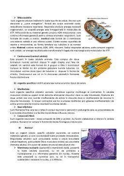 Referat - Celula, Unitatea Structurala si Genetica a Organismului