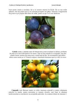 Disertație - Impactul Congelarii in Strat Fluidizat si a Perioadei de Depozitare asupra Calitatii unor Fructe
