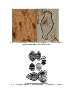 Curs - Hidrobiologie