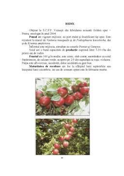 Licență - Studii privind Stabilirea Perioadei Optime de Altoire a Soiurilor de Măr